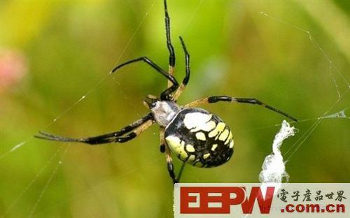 蜘蛛丝的新用途:可降解的电子设备
