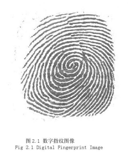 指纹识别中的图像处理研究------指纹图像的特性分析 (一)