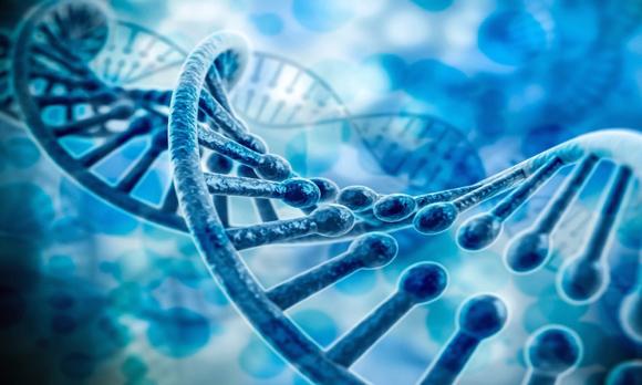大脑基因矢量图