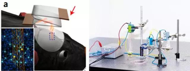 哈佛大学研发可注射柔性网状脑电极:有望治愈帕金森症