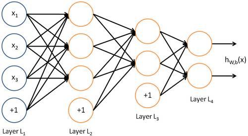 深度神经网络(DNN)是否模拟了人类大脑皮层结构?