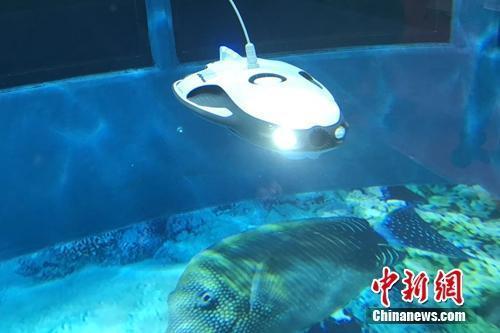 资料图:一款和鳐鱼外形相像的水中机器人。中新网 吴涛 摄