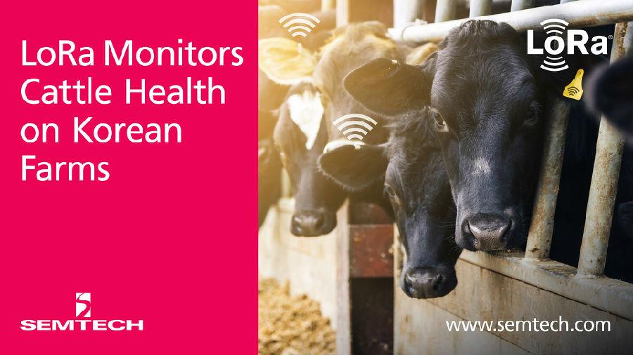 Semtech与SK Telecom采用LoRa技术监测牲畜健康情况