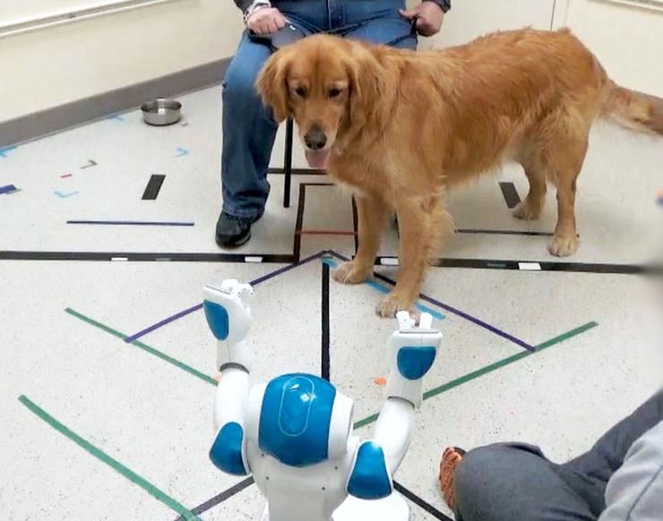 「狗机交互」来了!狗子会听谁的话?机器人 or 机器狗?