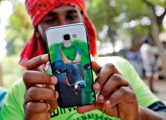 ▲在印度南部的泰米爾納德邦馬杜賴附近村莊,一名參加馴牛節活動的男子使用手機殼上印有牛頭的手機。