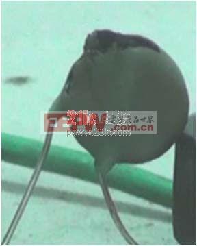 图4:MOV14D471 在600V*2A 电流试验后图片