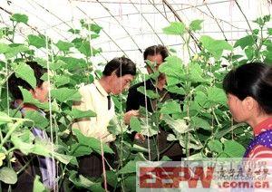 物联网在农业领域的应用